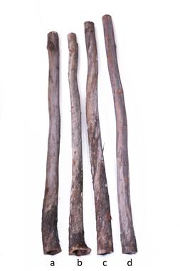 Eukalyptus Didgeridoo Rohlinge - bauen und gestalten Sie ihr eigenes Didge..., Artikelnummer: ec_roh_1