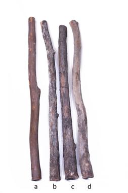 Eukalyptus Didgeridoo Rohlinge - bauen und gestalten Sie ihr eigenes Didge..., Artikelnummer: ec_roh_2